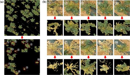Deep convolutional neural network for classifying Fusarium
