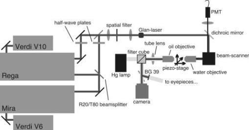 Multiphoton imaging of ultrashort pulse laser ablation in