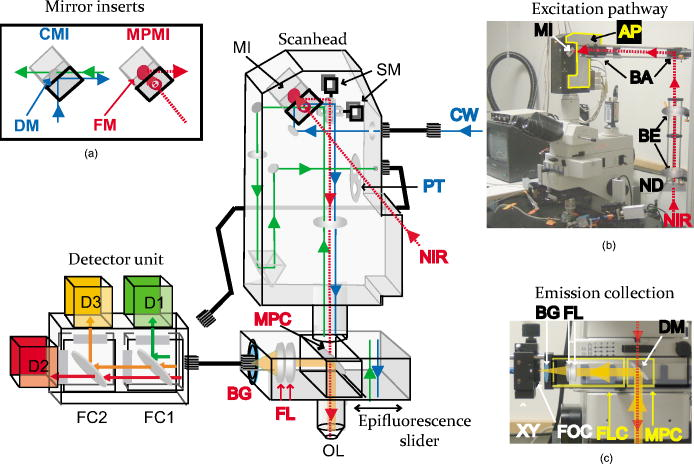 Multiphoton adaptation of a commercial low-cost confocal microscope