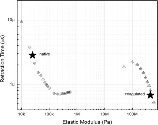 Study of laser-induced thermoelastic deformation of native and