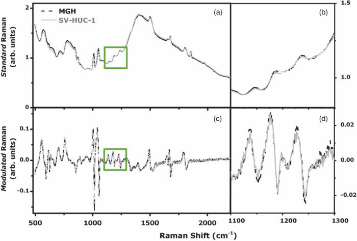 Modulated Raman spectroscopy for enhanced identification of bladder