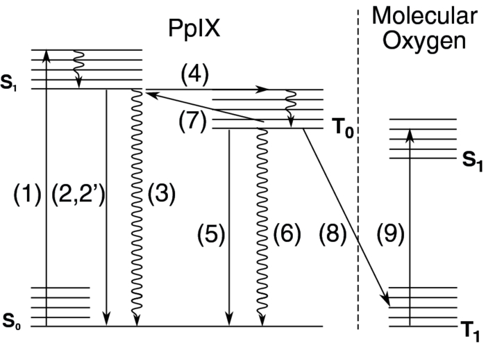 Optical Fiber Based Setup For In Vivo Measurement Of The