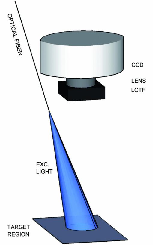 Drug Quantification In Turbid Media By Fluorescence