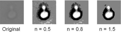 Image processing and classification algorithm for yeast cell