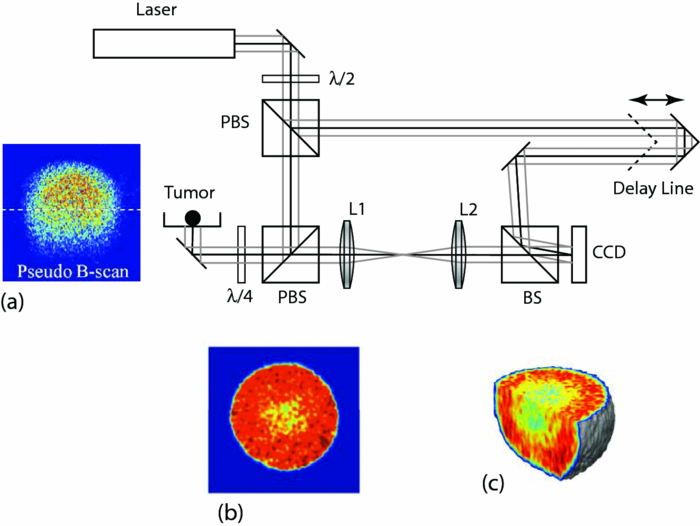 Holographic Tissue Dynamics Spectroscopy
