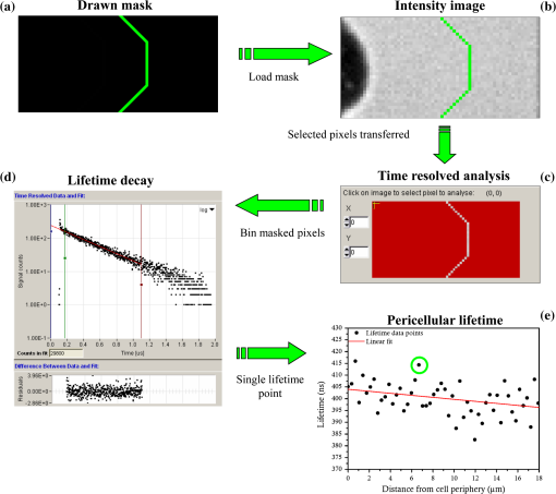 Single photon counting fluorescence lifetime detection of