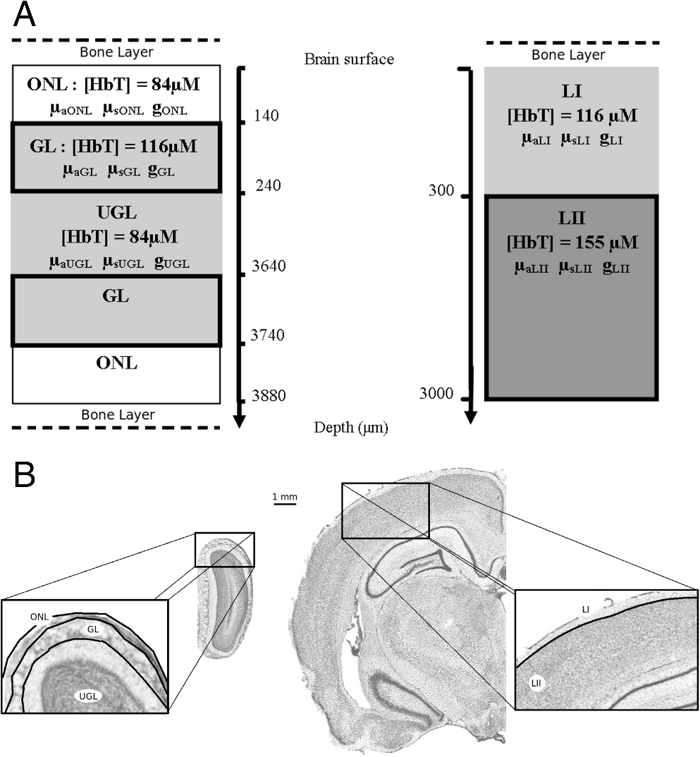 Multispectral Reflectance Imaging Of Brain Activation In Rodents Tc 90 Engine Compartment Diagram Fig 1