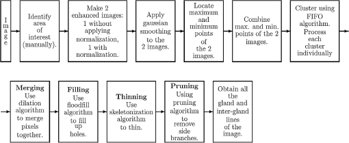 Detection of meibomian glands and classification of