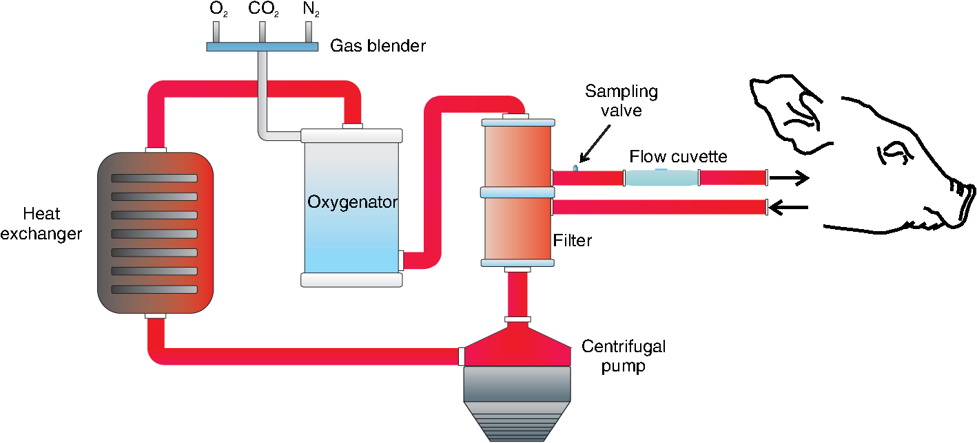 Continuous Haematic Ph Monitoring In Extracorporeal Circulation Induction Cooker Circuit Signalprocessing Diagram Block Of The Experimental Setup For Ex Vivo Evaluation Measuring System