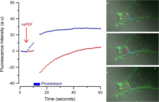 Nanosecond Pulsed Electric Field Thresholds For Nanopore