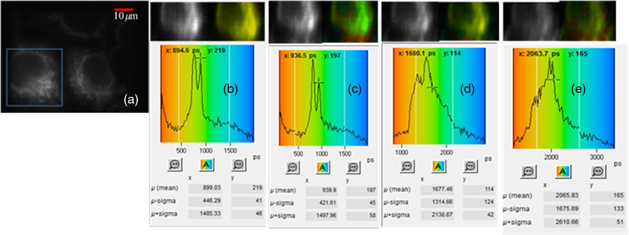 Dynamic fluorescence lifetime imaging based on acousto-optic