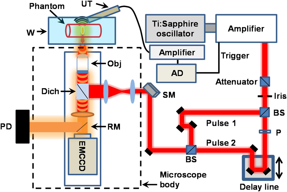 Investigating femtosecond-laser-induced two-photon photoacoustic