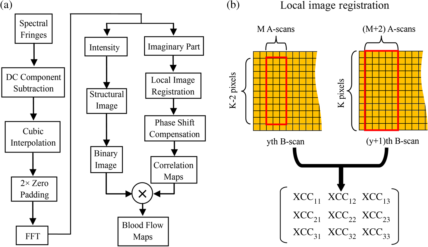 Imaginary part based correlation mapping optical coherence jbo2011116009f001g pooptronica Images