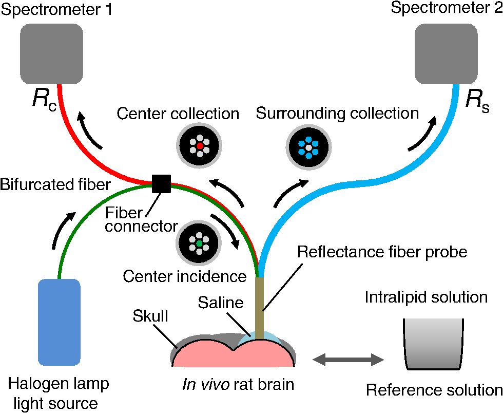 In Vivo Estimation Of Light Scattering And Absorption Properties Fiber Optic Probe Diagram A Single System For Measuring The Diffuse Reflectance Spectra With Two Source Collection Geometries