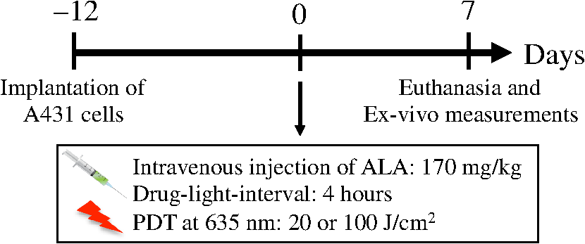 In vivo evaluation of battery-operated light-emitting diode