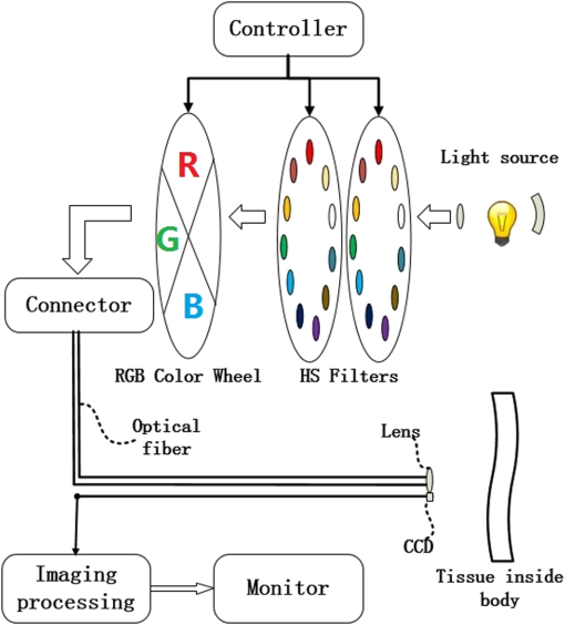 image enhancement based on in vivo hyperspectral