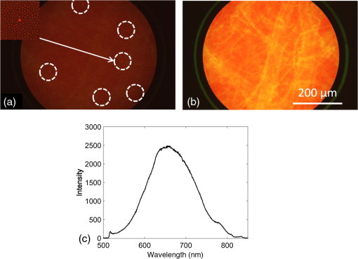 Two-color widefield fluorescence microendoscopy enables