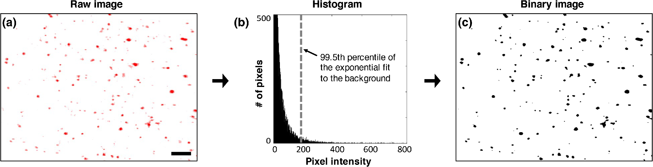 Optical-sectioning microscopy of protoporphyrin IX fluorescence in