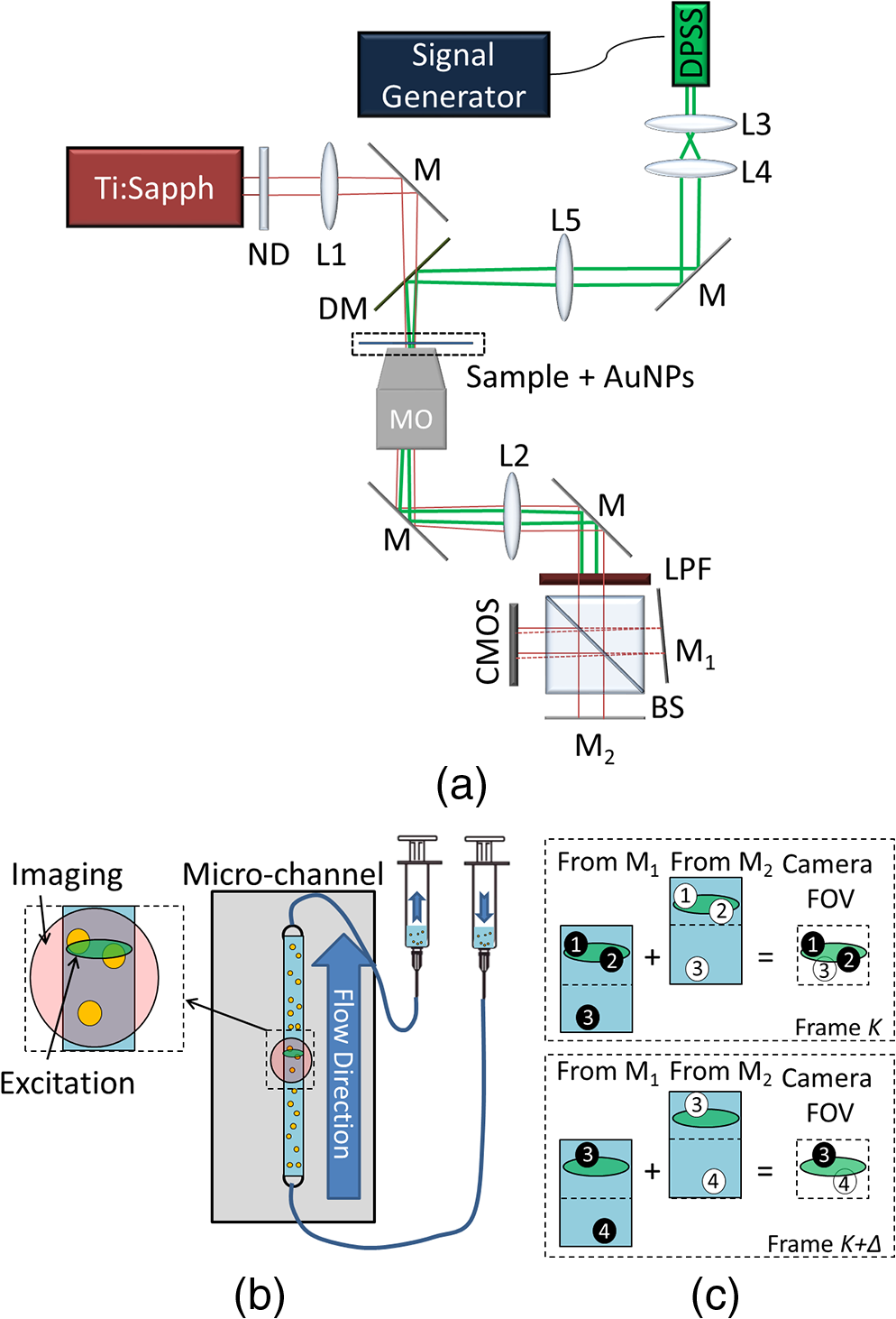 Dynamic Measurements Of Flowing Cells Labeled By Gold Nanoparticles Camera Diagram Related Keywords C The Arrangement Interfering Beams Upon Plane And Circles 1 To 4 Represent In Channel
