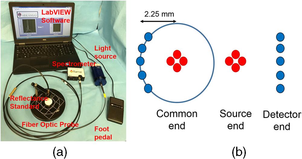 Optical spectroscopic sensing of tumor hypoxia