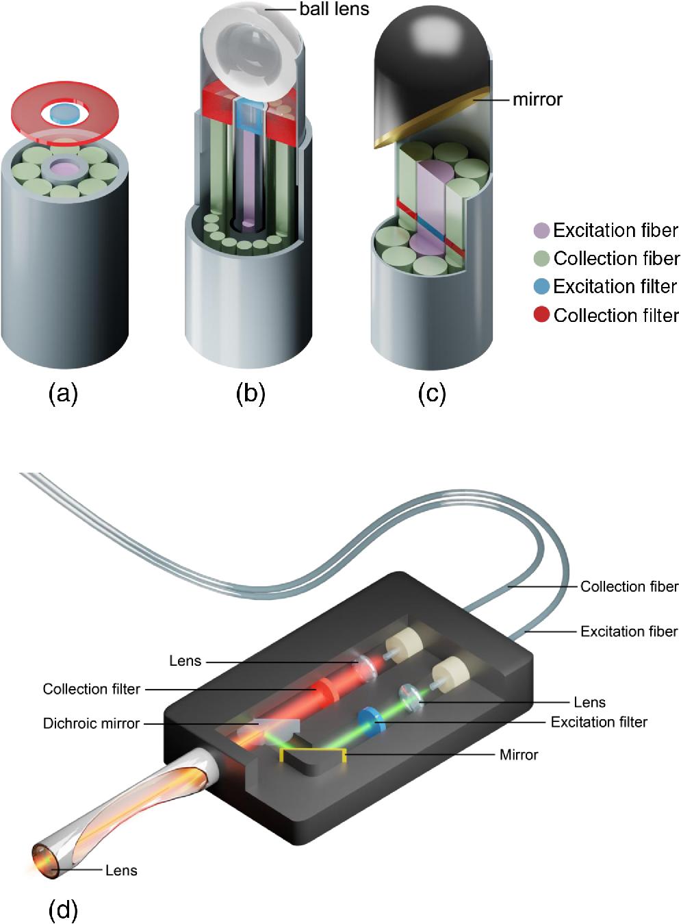 I In Vivo I Raman Spectroscopy From Basics To Applications