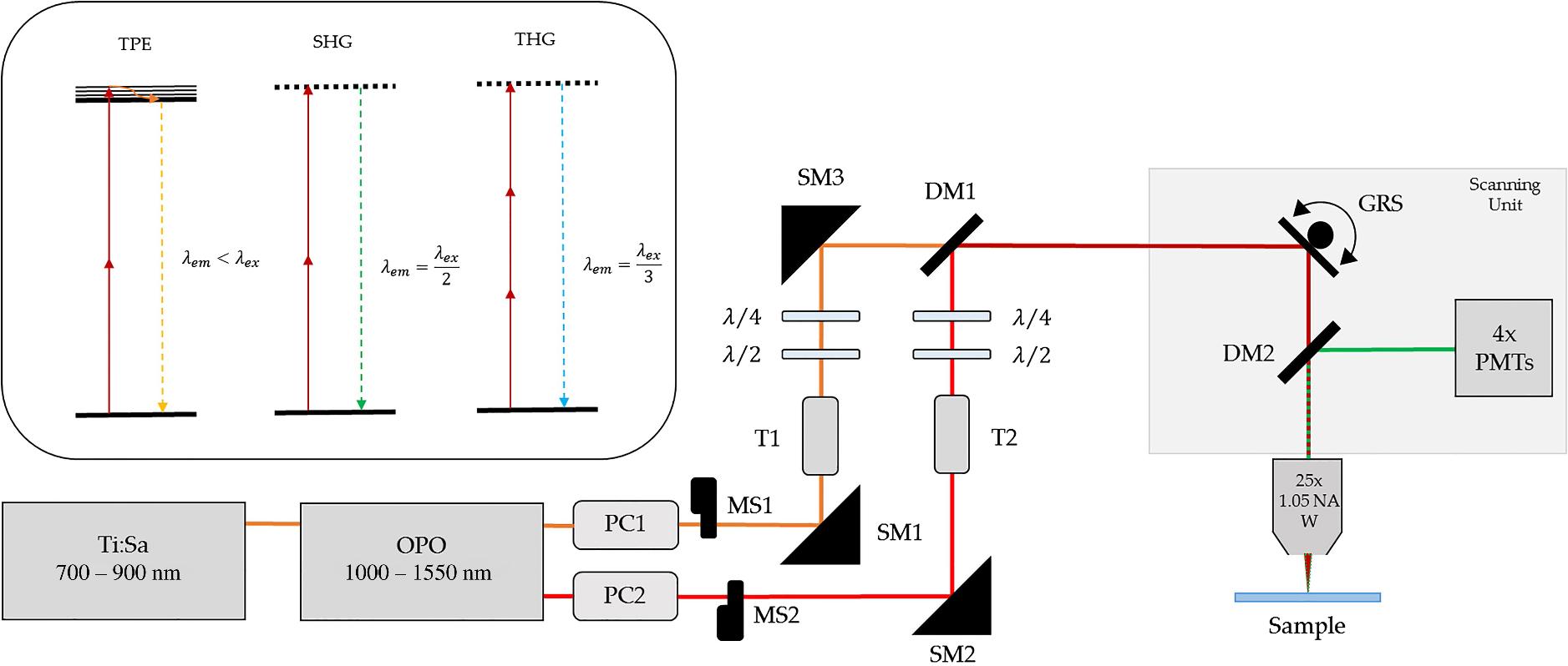 Multimodal label-free ex vivo imaging using a dual-wavelength