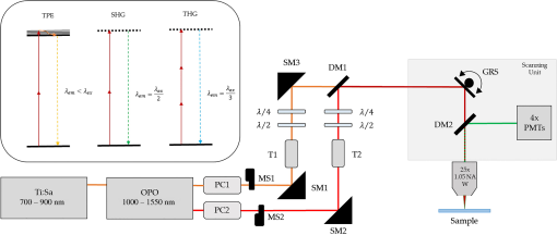Multimodal label-free ex vivo imaging using a dual