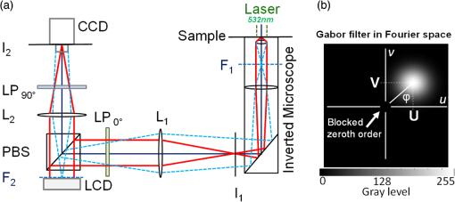 Label-free dynamic segmentation and morphological analysis