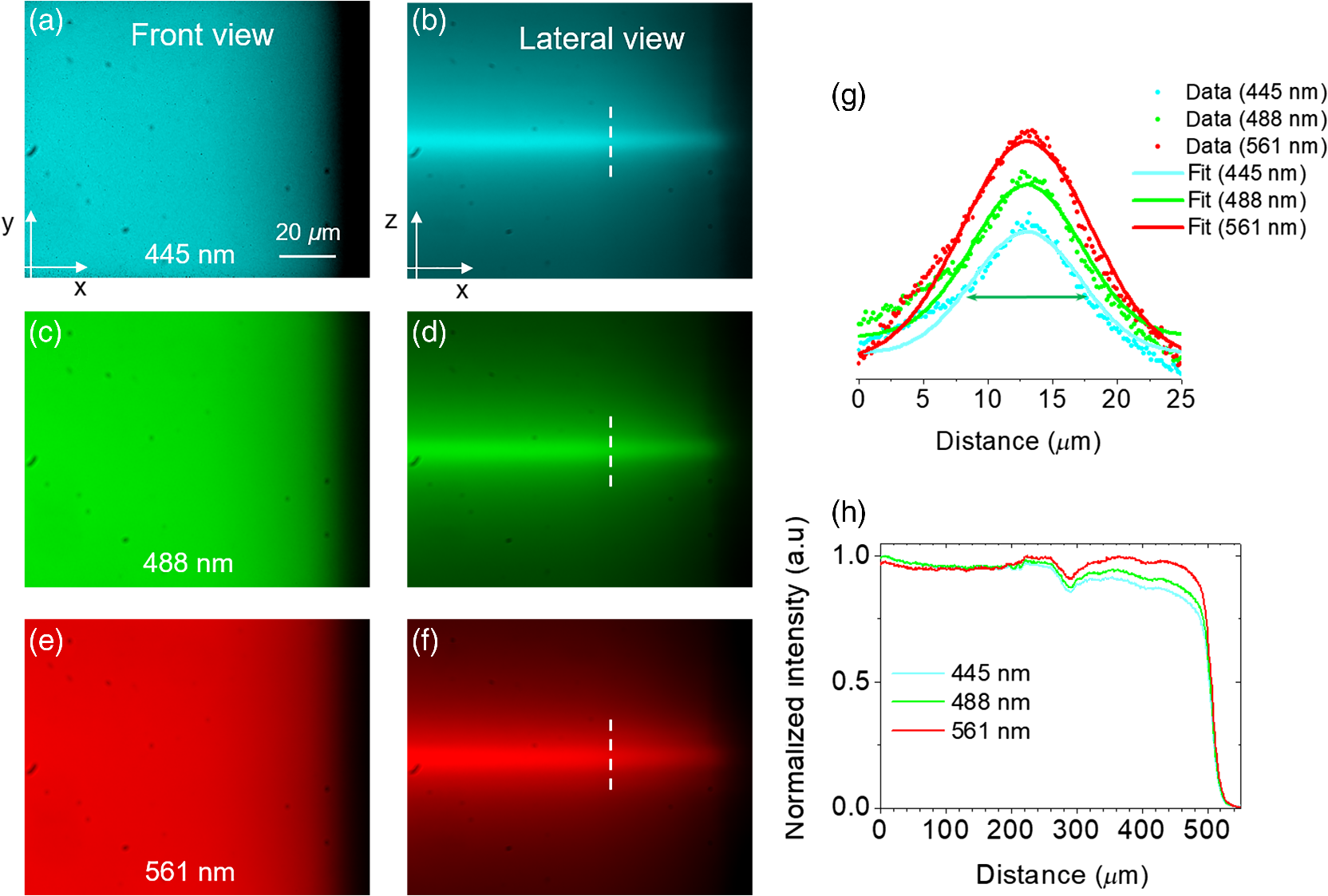 Multicolor fluorescence microscopy using static light sheets