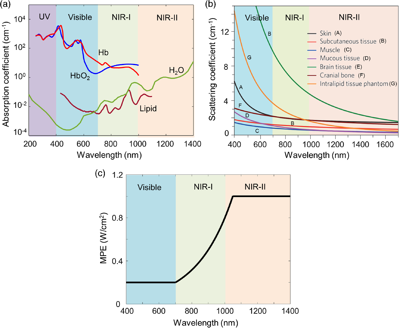 Photoacoustic Imaging In The Second Near Infrared Window