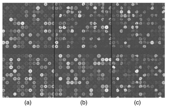 Simulation Of Cdna Microarrays Via A Parameterized Random Signal Model