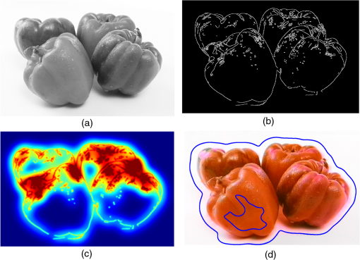 Automatic colorization using fully convolutional networks