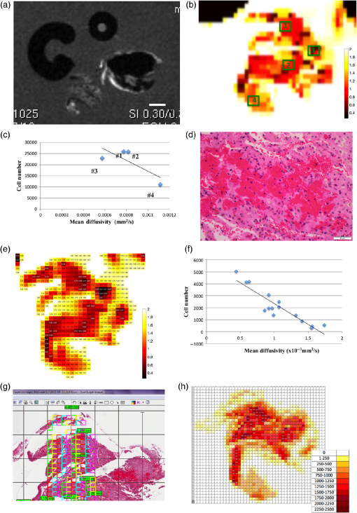 Array - ex vivo tissue imaging for radiology u2013pathology correlation  a pilot      rh   spiedigitallibrary org