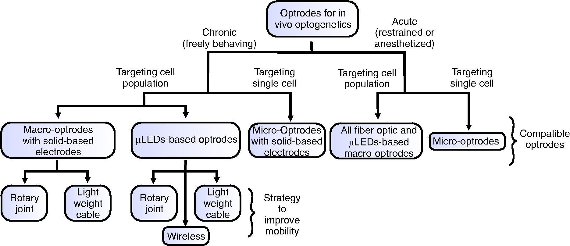Optrodes for combined optogenetics and electrophysiology in live animals