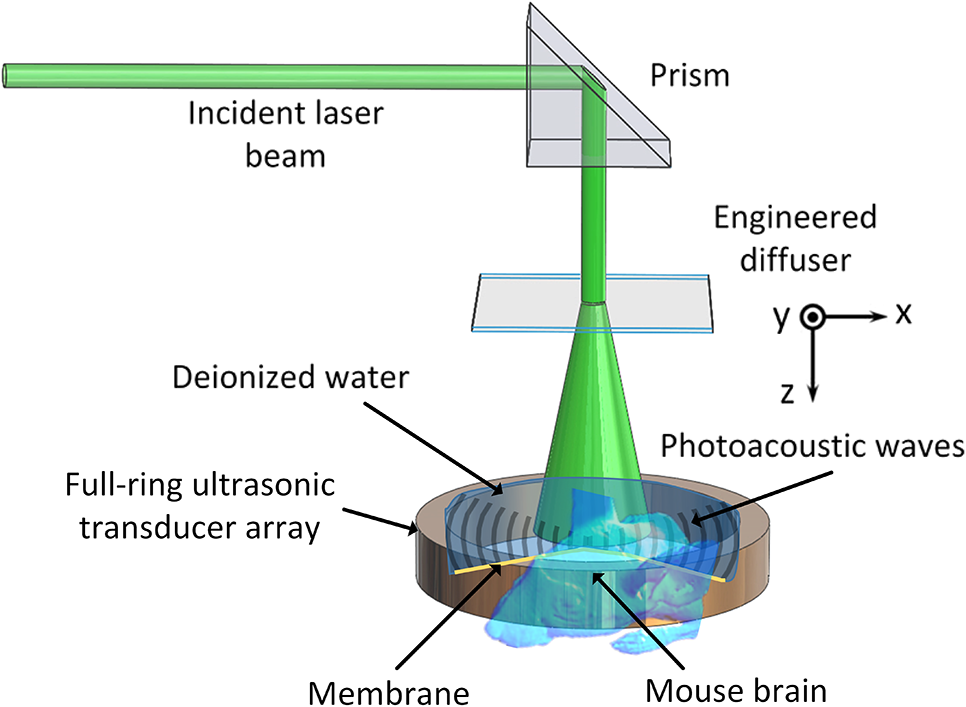 Label free photoacoustic tomography of whole mouse brain structures nph33035001f001g ccuart Gallery
