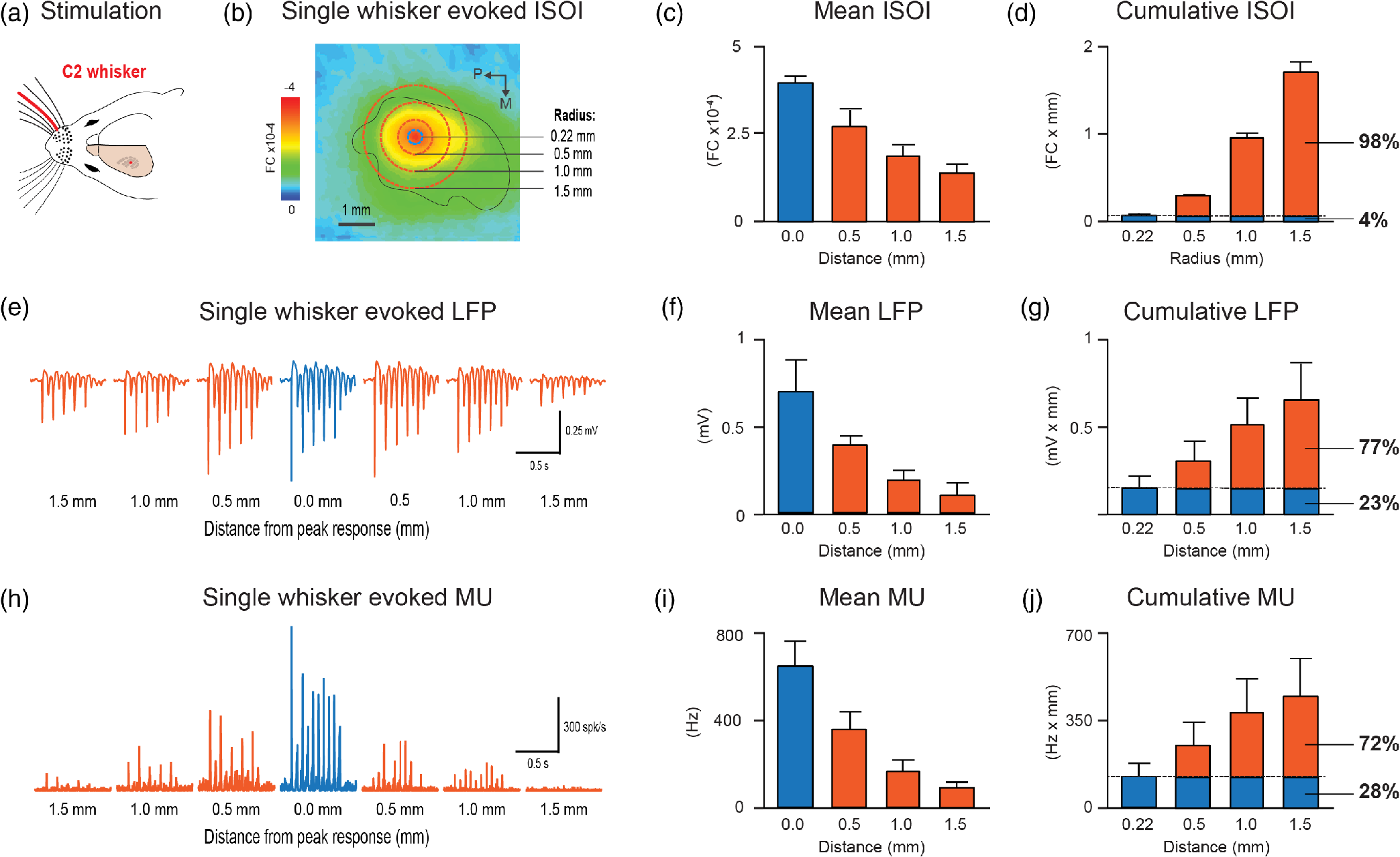 Prominent lateral spread of imaged evoked activity beyond cortical