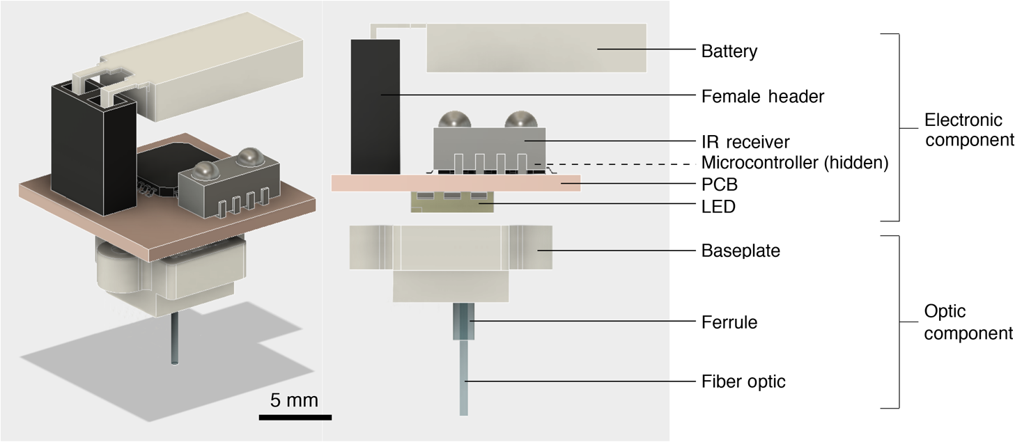 Cerebralux A Low Cost Open Source Wireless Probe For Optogenetic Place The Circuit Board In Cavity And Slot Battery Pack Into Electronic Optic Components Both Have Magnets That Allow Easy Attachment Correct Alignment Between Fiber Led