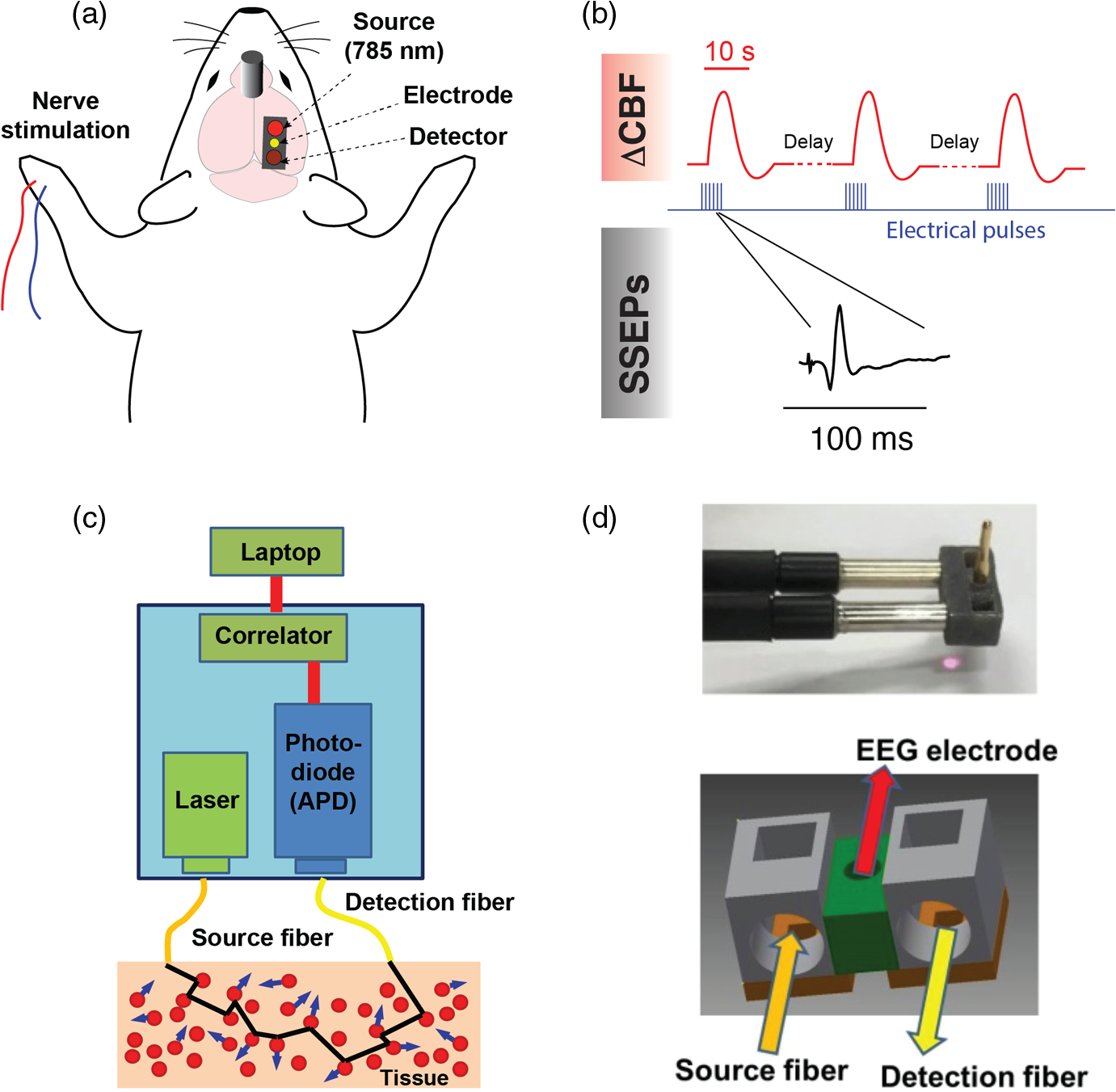 Alterations In Neurovascular Coupling Following Acute Traumatic Above Is A Schematic Diagram Of An Lm741 Light Dark Sensor Circuit D Photograph And The 3 Printed Dcs Probe Tip Delivered Collected From Tissue Through Fiber Optics That Are Coupled To