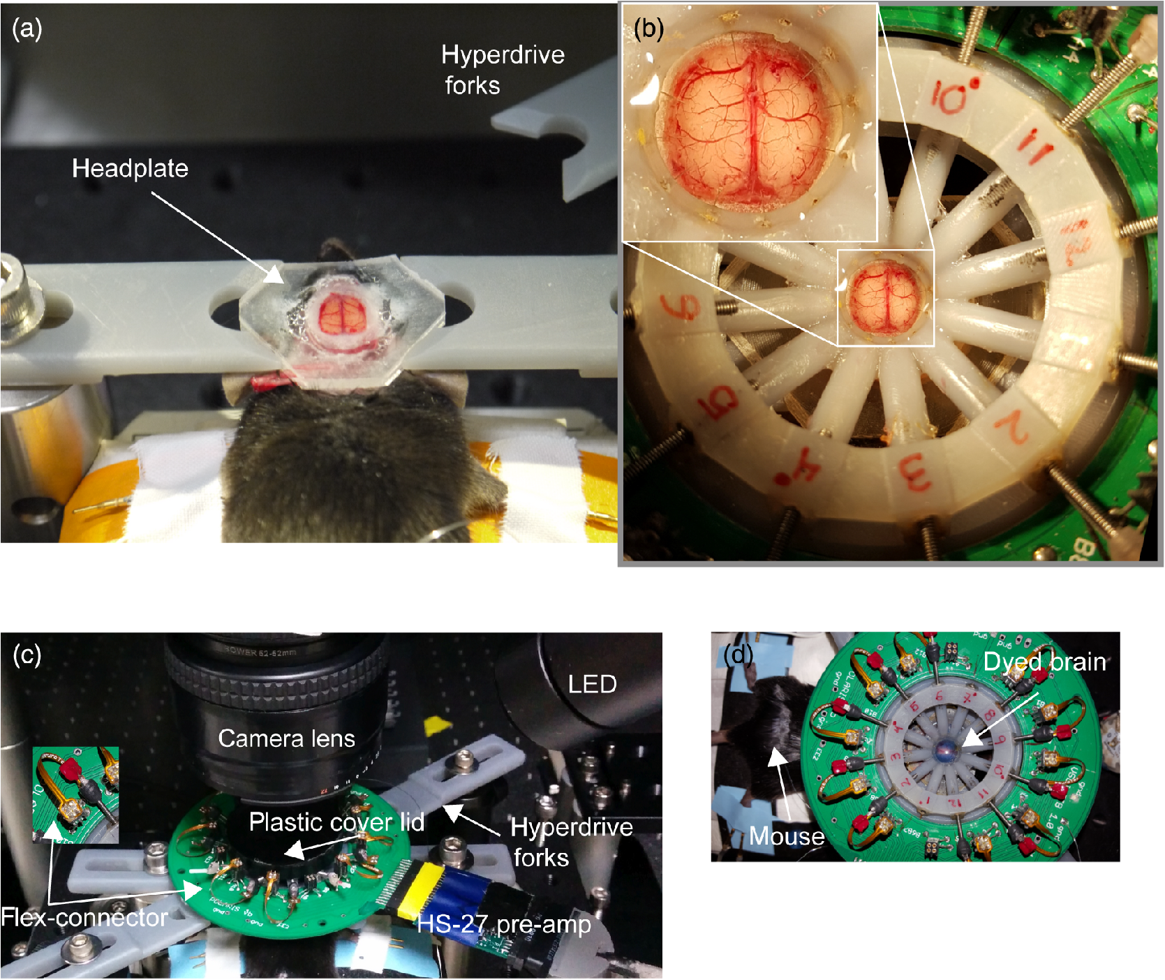 High Performance Inexpensive Setup For Simultaneous Multisite Circuit Board From A Defunct Optical Computer Mouse Picture Of The Brain Is Covered With Cover Lid Inset Flex Connectors D Top Down Overview Experimental When Has Been Dyed
