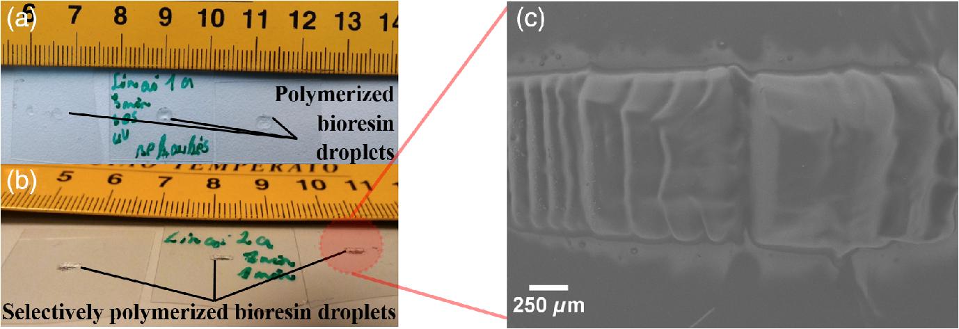Photosensitive naturally derived resins toward optical 3-D printing