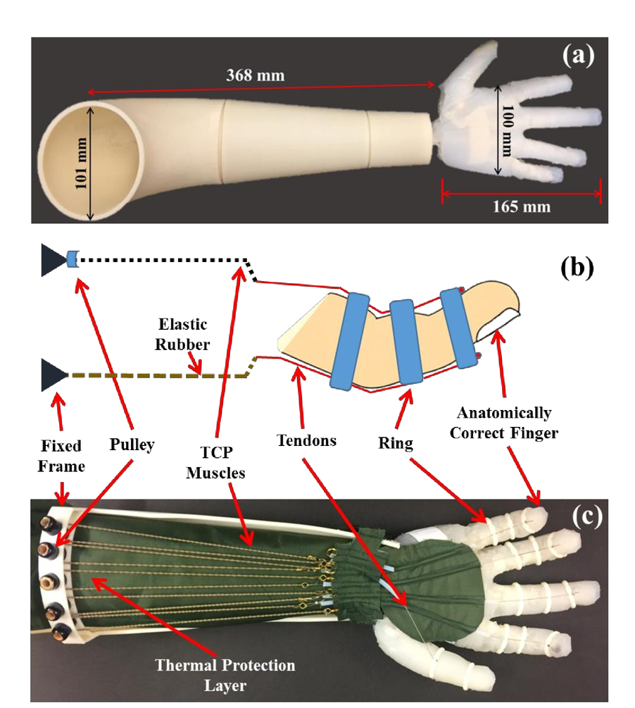 Design Of A 3d Printed Lightweight Orthotic Device Based On Twisted Linear Actuator Wiring Color Code 00096 Psisdg10164 1016428 Page 4 1
