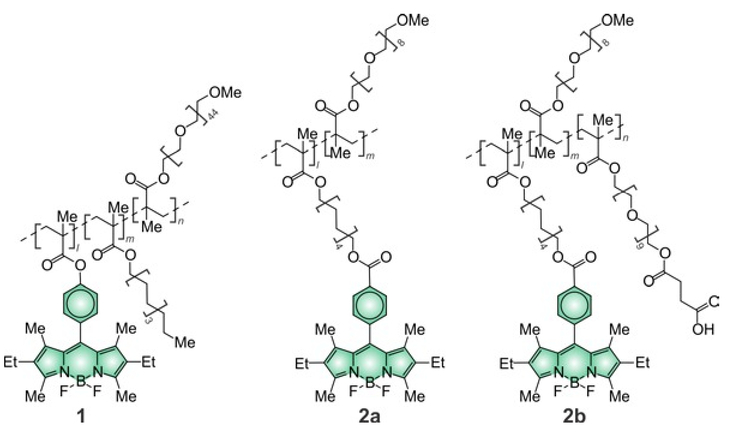 molecular probes handbook download