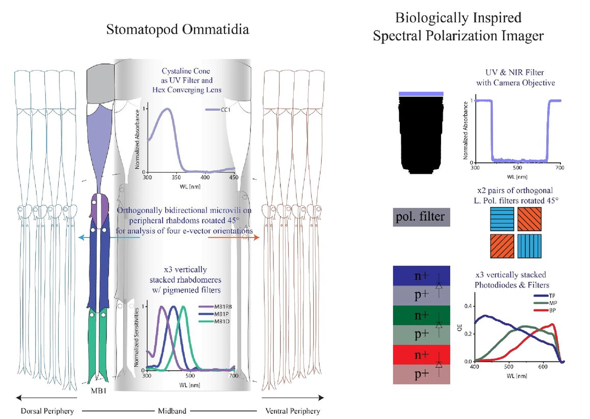 Biologically Inspired Imaging Sensors For Multi Spectral And Figure1 Color Sensor Circuit 00129 Psisdg10655 106550c Page 2 1
