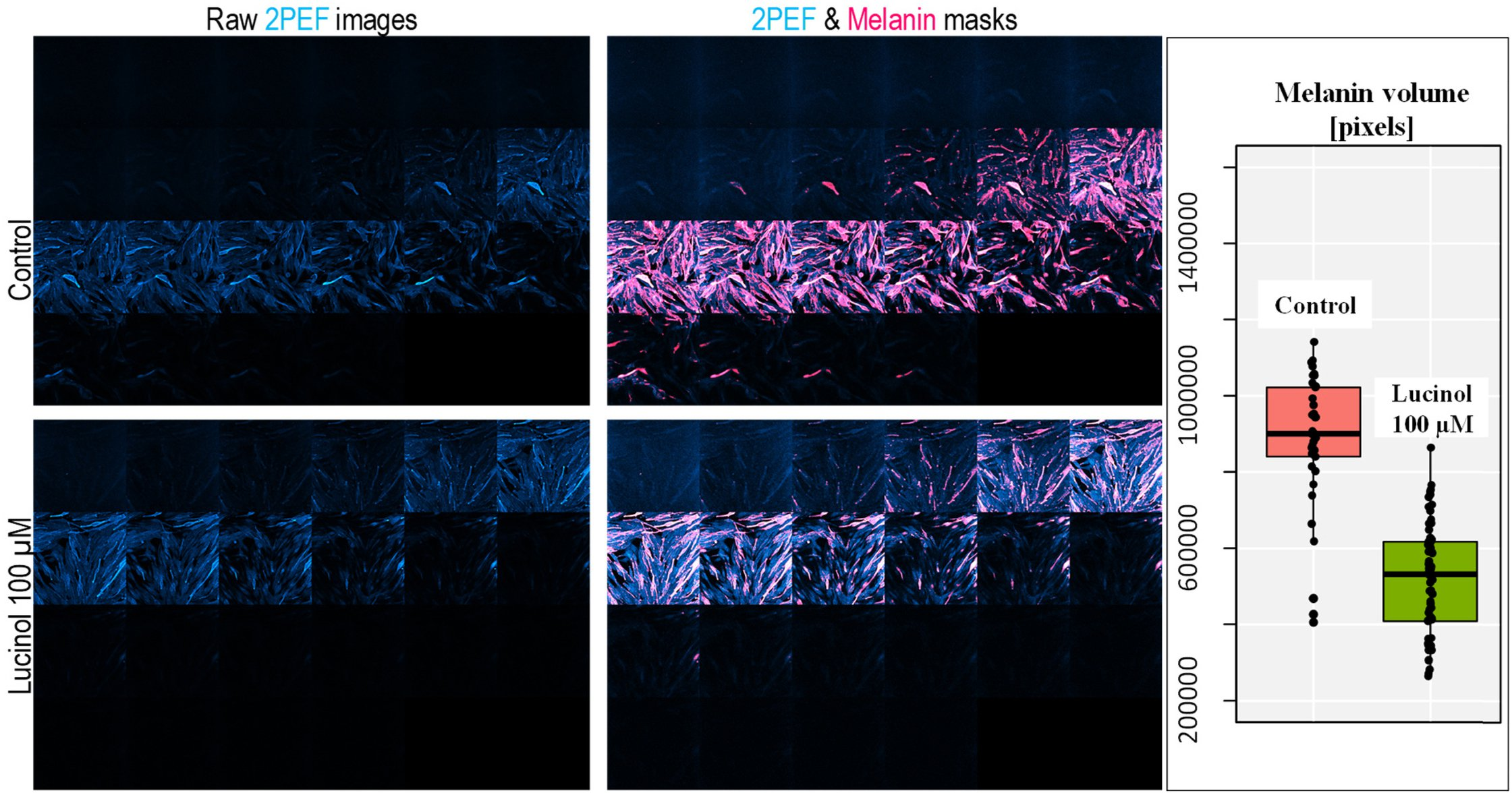 Multiphoton imaging in cosmetics research