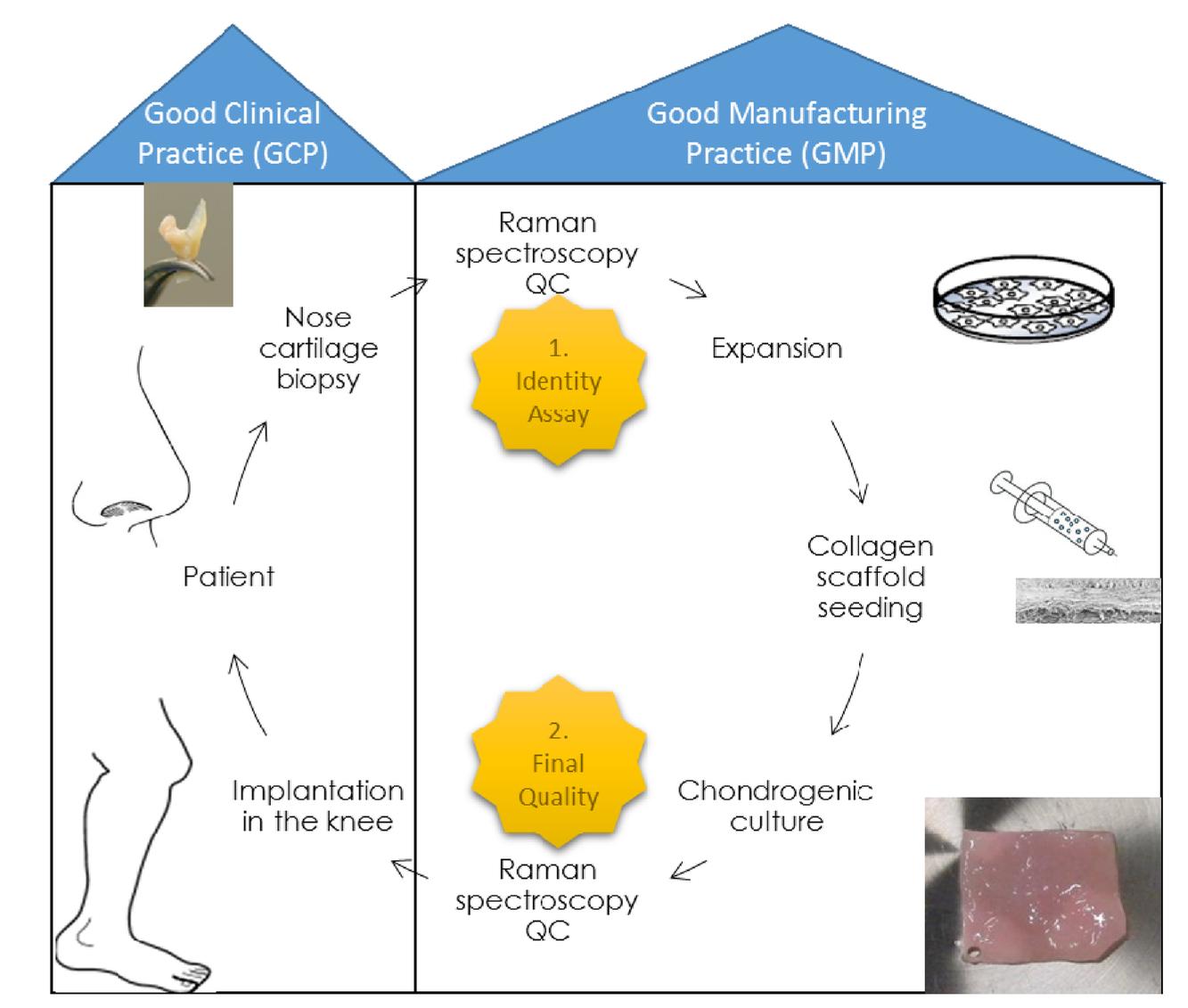 Raman spectroscopy quality controls for GMP compliant