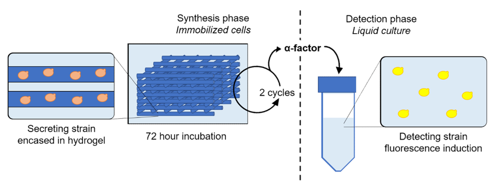 Additive manufacturing of catalytically active living material hydrogels