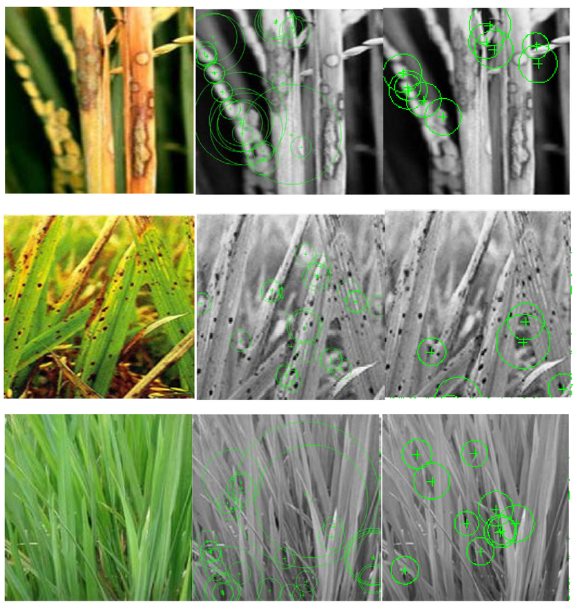 Mobile detection of crop diseases for agricultural yield