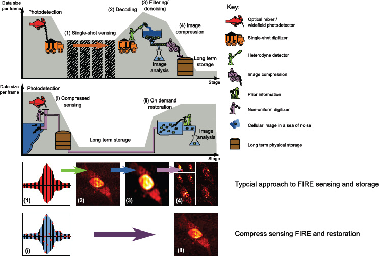 Signal reduction in fluorescence imaging using radio frequency