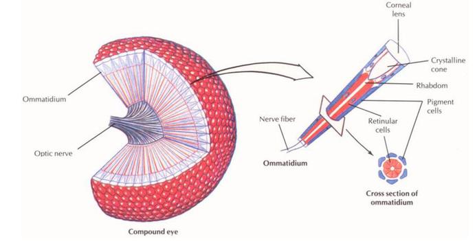 Eyes Of Bee Diagram Circuit Connection Diagram