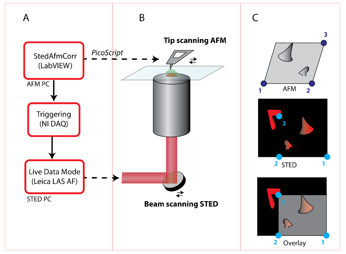 A software tool for STED-AFM correlative super-resolution